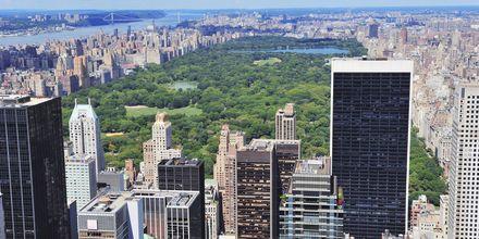 Central Park on kuin vihreä keidas keskellä kaupunkia, New York, Manhattan.