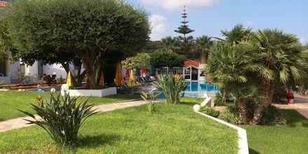 Puutarha, hotelli Nikolas Villas. Hersonissos, Kreeta.