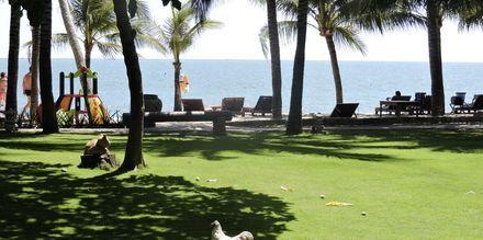 Puutarha. Hotelli Oriental Pearl Resort, Phan Thiet, Vietnam.