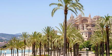 Katedraali, Palma & Illetas