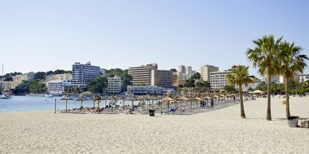 Palma Novan ranta, Mallorca.