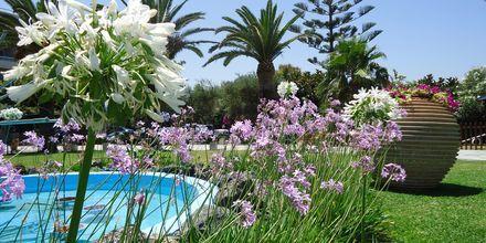 Puutarha. Hotelli Panorama, Kreeta.