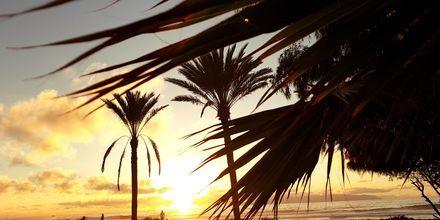 Kaunis auringonlasku, Playa de las Americas, Teneriffa, Kanariansaaret.