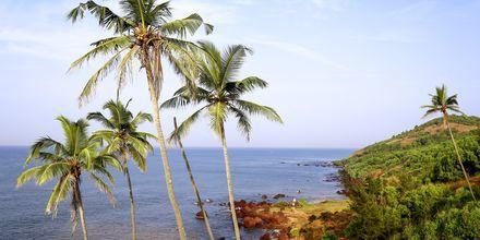 Anjuna Beach, Pohjois-Goa, Intia.
