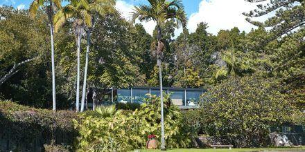 Puutarha, hotelli Quinta da Casa Branca, Funchal, Madeira.