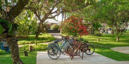 Vuokraa pyörä ja tutustu ympäristöön.