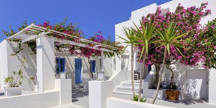 Hotelli Sigalas, Santorini, Kreikka.