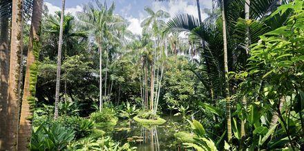 Singaporen kasvitieteellinen puutarha on käymisen arvoinen paikka.