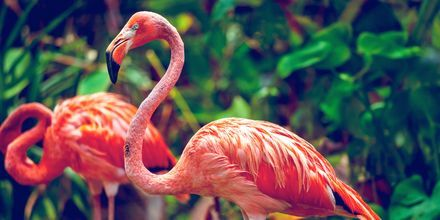 Singapore Zoo on tunnettu maailmanlaajuisesti.