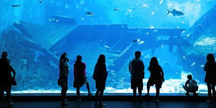 Marine Life Park on  Sentosan saarella sijaitseva vesimuseo ja seikkailupuisto Singaporessa.