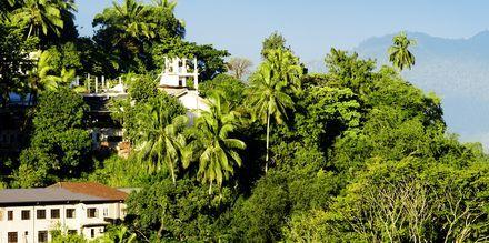 Reheviä maisemia Kandyssä. Sri Lanka.