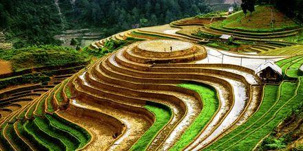 Vietnam - Riisipeltoa