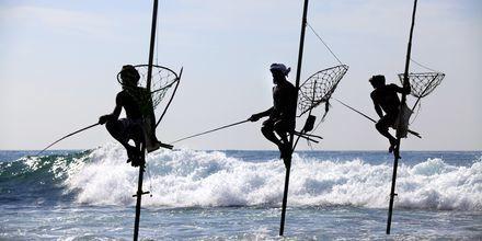 Pylväiden päässä istuvat kalastajat ovat tuttu näky Sri Lankan rannikolla.