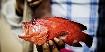 Päivän saalista tuoreimmillaan. Weligama Bay, Sri Lanka.