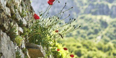 Rentoudu rauhallisessa ympäristössä, Zagoria, Kreikka.